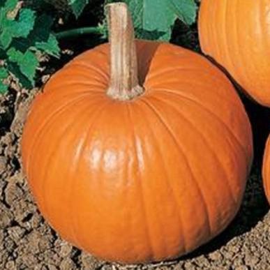 The Best Pumpkin Stem Texture Background