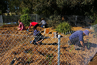 Working on the native food garden